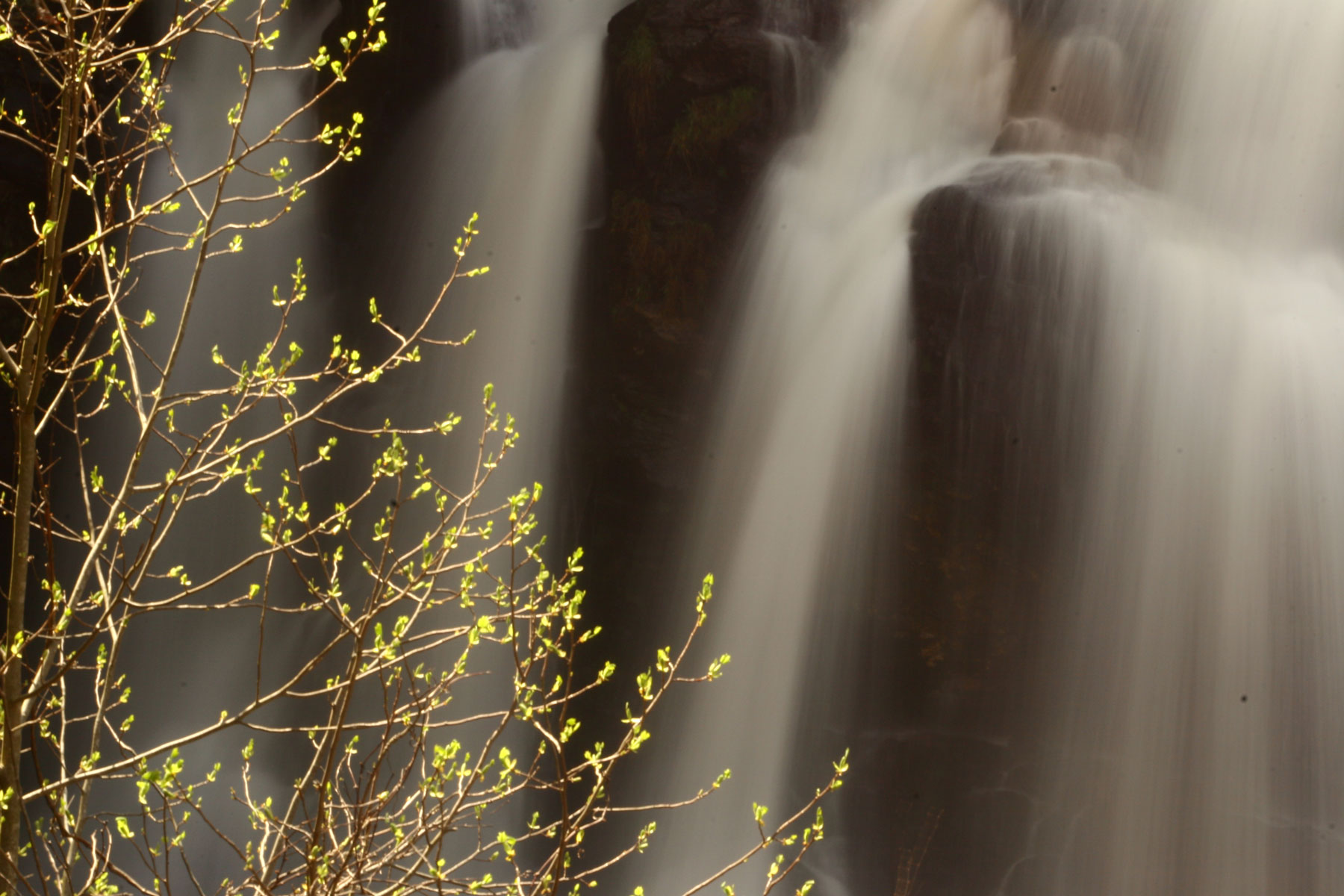 Spray of waterfalls behind a tree branch