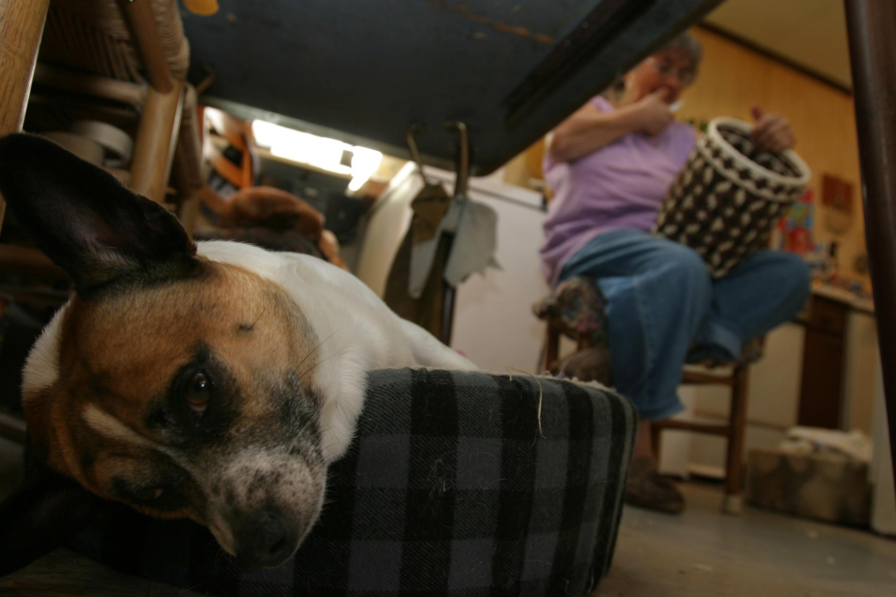 Dog hanging head off of its bed while a woman weaves a basket in the background